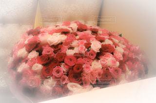 365本の花 - No.1225256