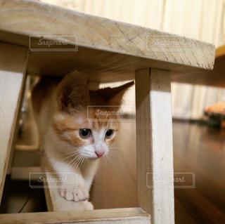 探検する子猫の写真・画像素材[1040790]