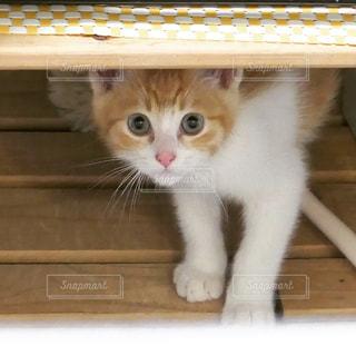 木製の表面の上に座る茶色と白の猫の写真・画像素材[1040795]