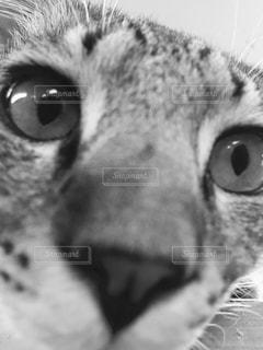 猫 - No.673988