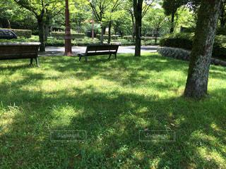 公園の写真・画像素材[674109]