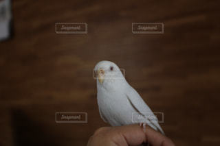 鳥の写真・画像素材[674071]