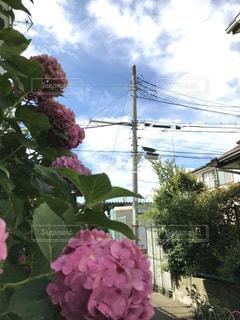 花の写真・画像素材[674253]