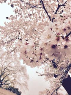 春の写真・画像素材[674340]