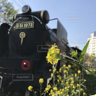 春の写真・画像素材[674468]