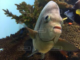 魚の写真・画像素材[674536]