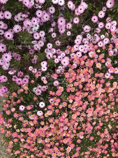 お花の写真・画像素材[674568]