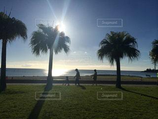 光と海の写真・画像素材[674587]