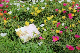 花畑の写真・画像素材[697276]