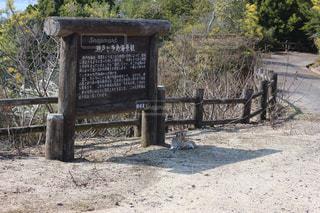 大久野島の写真・画像素材[697288]