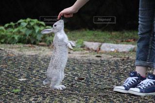 動物の写真・画像素材[697392]