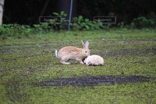 大久野島の写真・画像素材[697395]