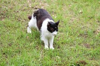 猫の写真・画像素材[55170]