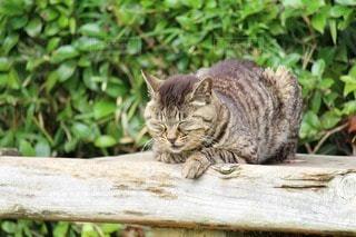 猫の写真・画像素材[55223]