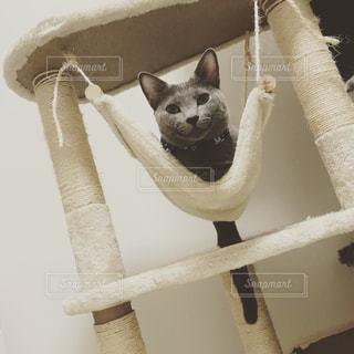 白い面の上に座って猫の写真・画像素材[1038267]