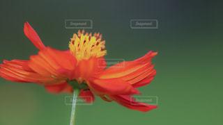 花の写真・画像素材[675757]