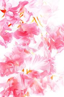 花の写真・画像素材[676395]