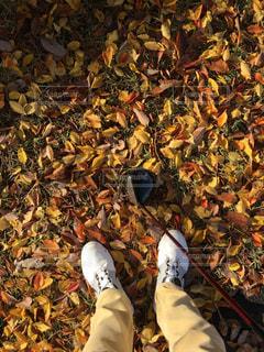秋の写真・画像素材[679890]