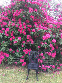 ピンクのお花の写真・画像素材[676254]