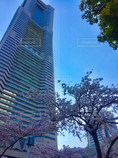 ビルと桜 - No.676304