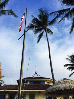 ヤシの木と星条旗の写真・画像素材[844570]