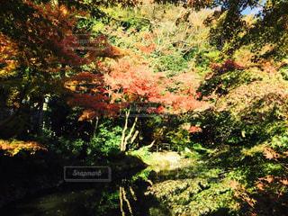 水面に映る紅葉の写真・画像素材[894455]