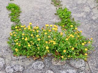 花の写真・画像素材[1410423]