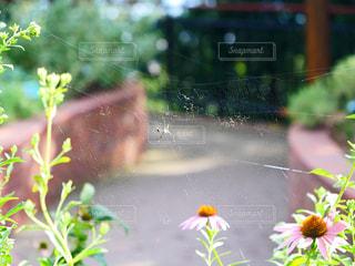 蜘蛛の巣の写真・画像素材[1423003]
