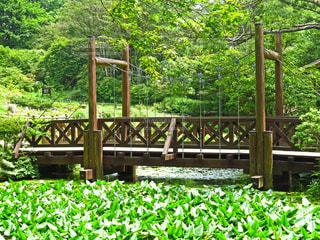 橋の写真・画像素材[1439667]