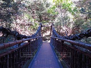 猿のかずら橋の写真・画像素材[1444990]