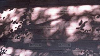 影の写真・画像素材[1453629]