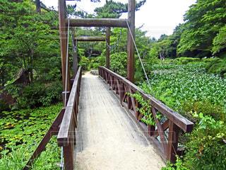 橋の写真・画像素材[1453647]