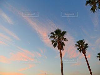空の写真・画像素材[1524672]