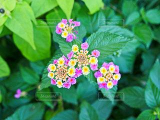 花の写真・画像素材[1575156]