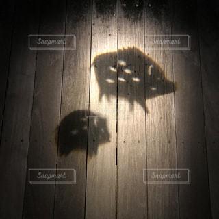 影絵(イノシシ)の写真・画像素材[1679017]