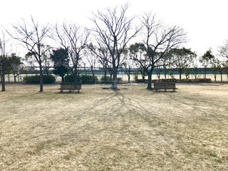 公園の写真・画像素材[1731954]