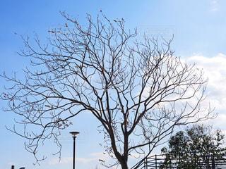 木の写真・画像素材[1732086]