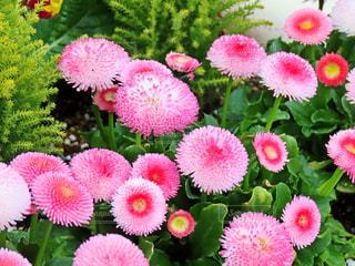 花の写真・画像素材[1851010]