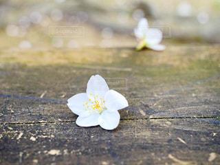 桜の写真・画像素材[1990028]