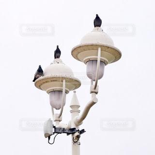 街灯の写真・画像素材[2060228]