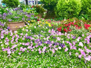 花の写真・画像素材[2241880]