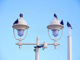 鳩の写真・画像素材[2243502]