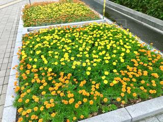 花の写真・画像素材[2255785]