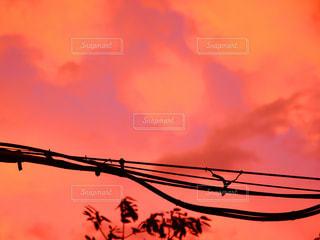 夕焼けの写真・画像素材[2586478]