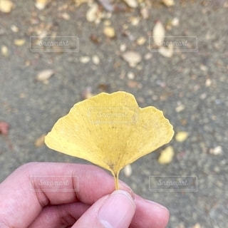 秋の写真・画像素材[2759192]