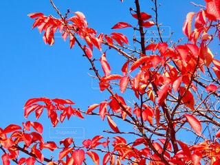 秋の写真・画像素材[2766021]