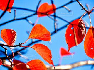 秋の写真・画像素材[2766023]