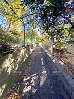 道の写真・画像素材[2774496]