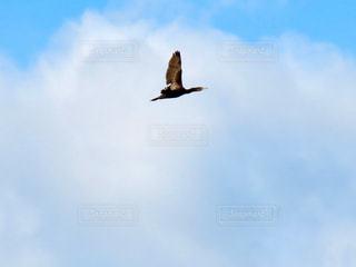 鳥の写真・画像素材[2780206]