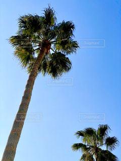 ヤシの木の写真・画像素材[2813308]